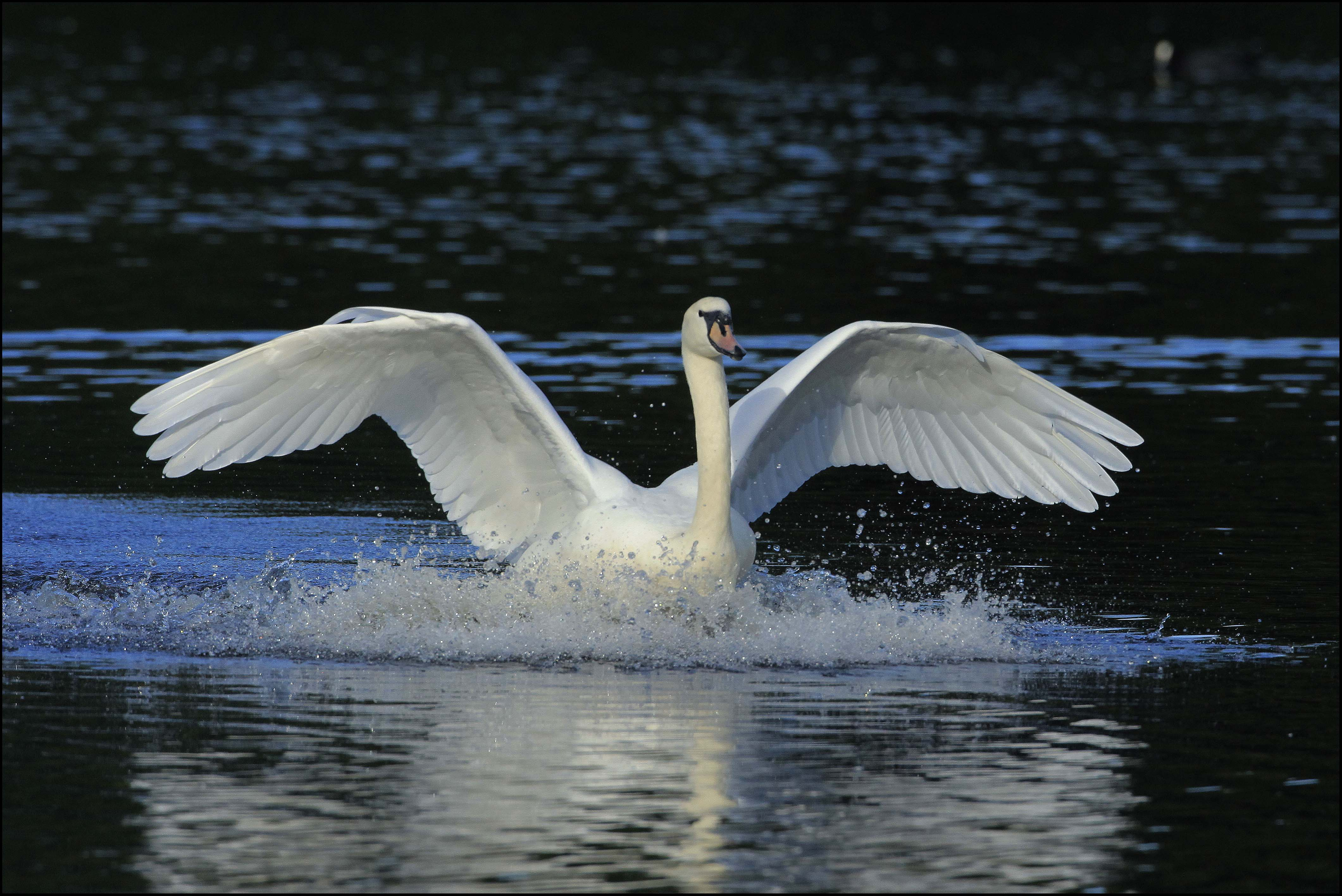 They certainly are elegant creatures we are lucky to have them at