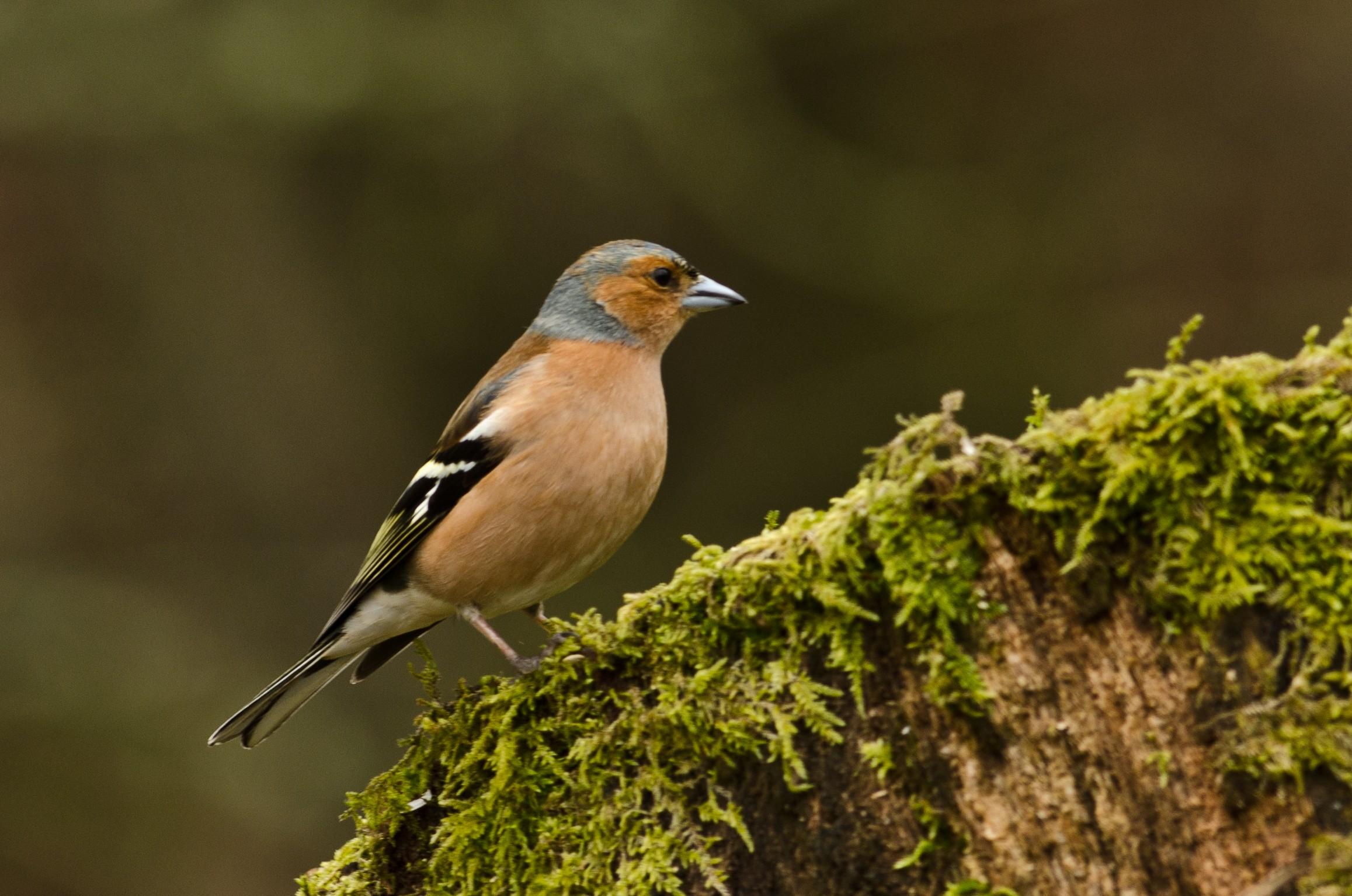 Radnor bird blog