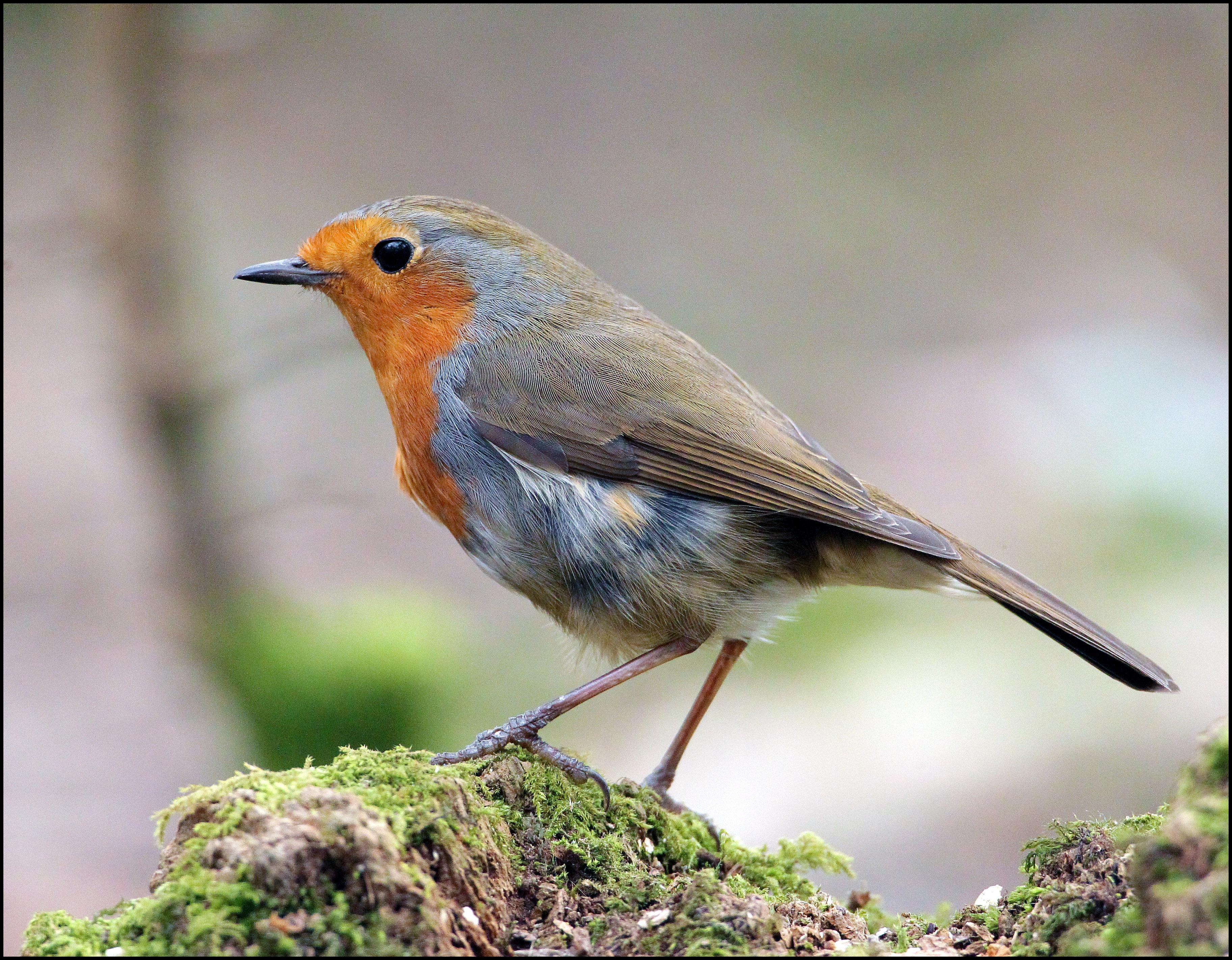 Lake Woodland Birds.