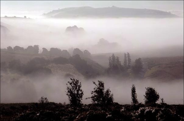 rhogo in the mist.