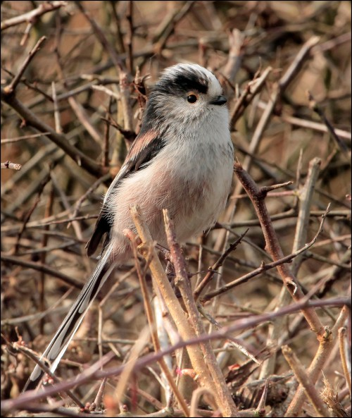 Ltt perches