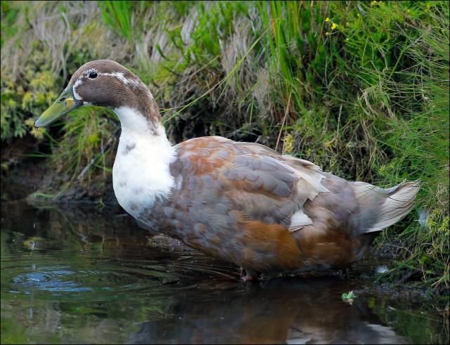 strange water fowl