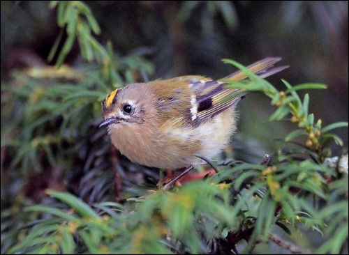 goldcrest lake 2 (2)