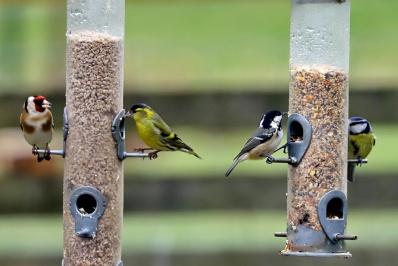 Mixed birds feeding 10
