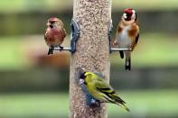 Mixed birds feeding 12